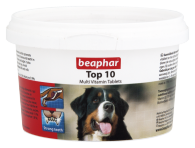 Top 10 Dog