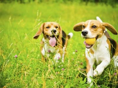 Beaphar CBD: voor lichaam en geest van hond en kat
