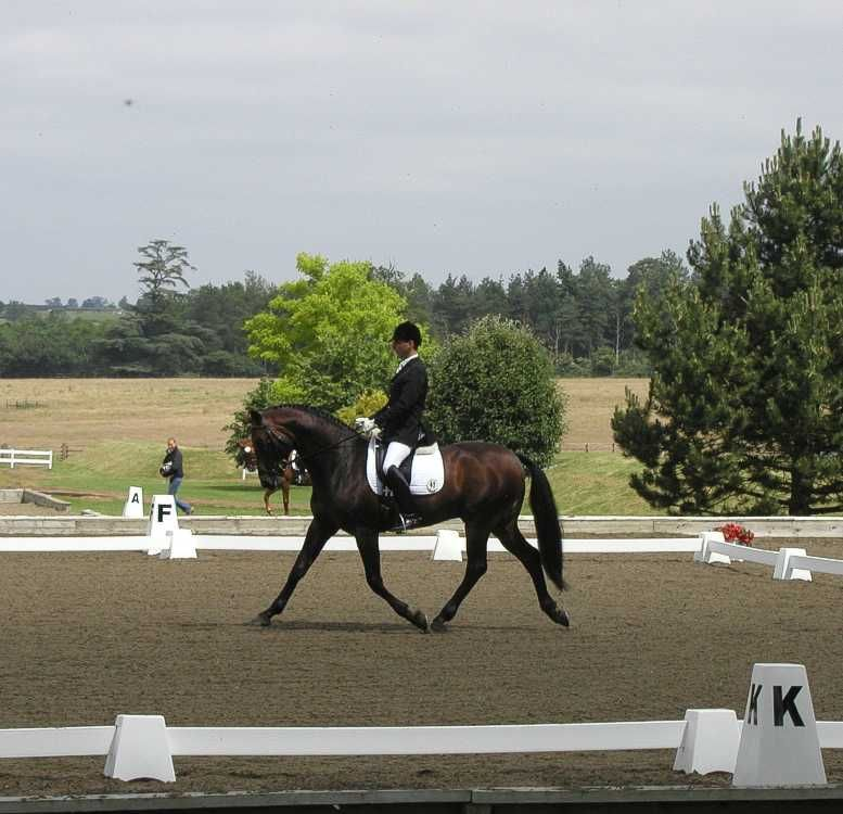 Dressage Arena with Towers